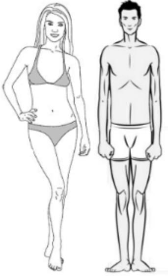 lichaamstype Ectomorph, Mesomorph, Endomorph