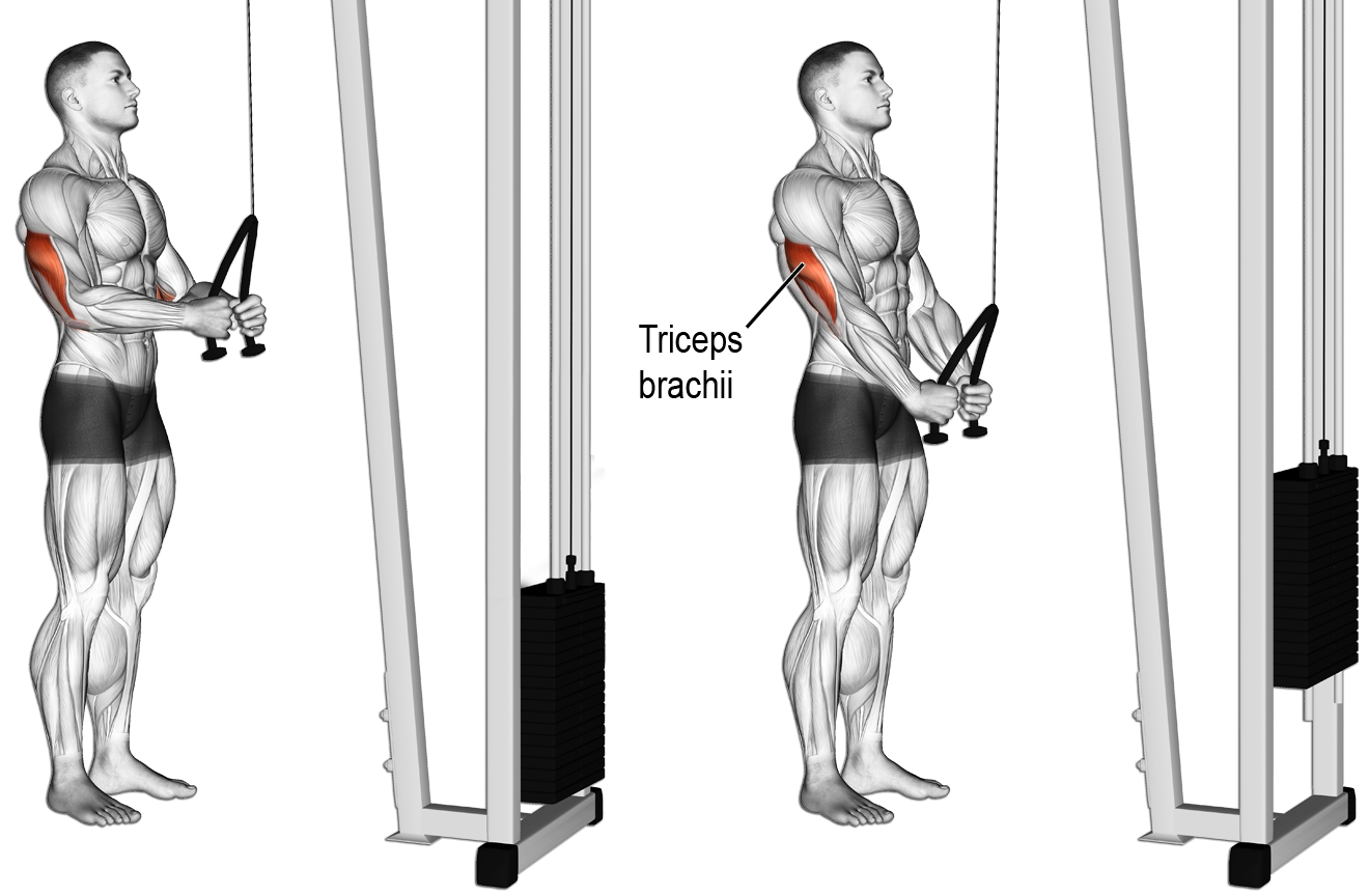 oefeningen triceps tricep push down