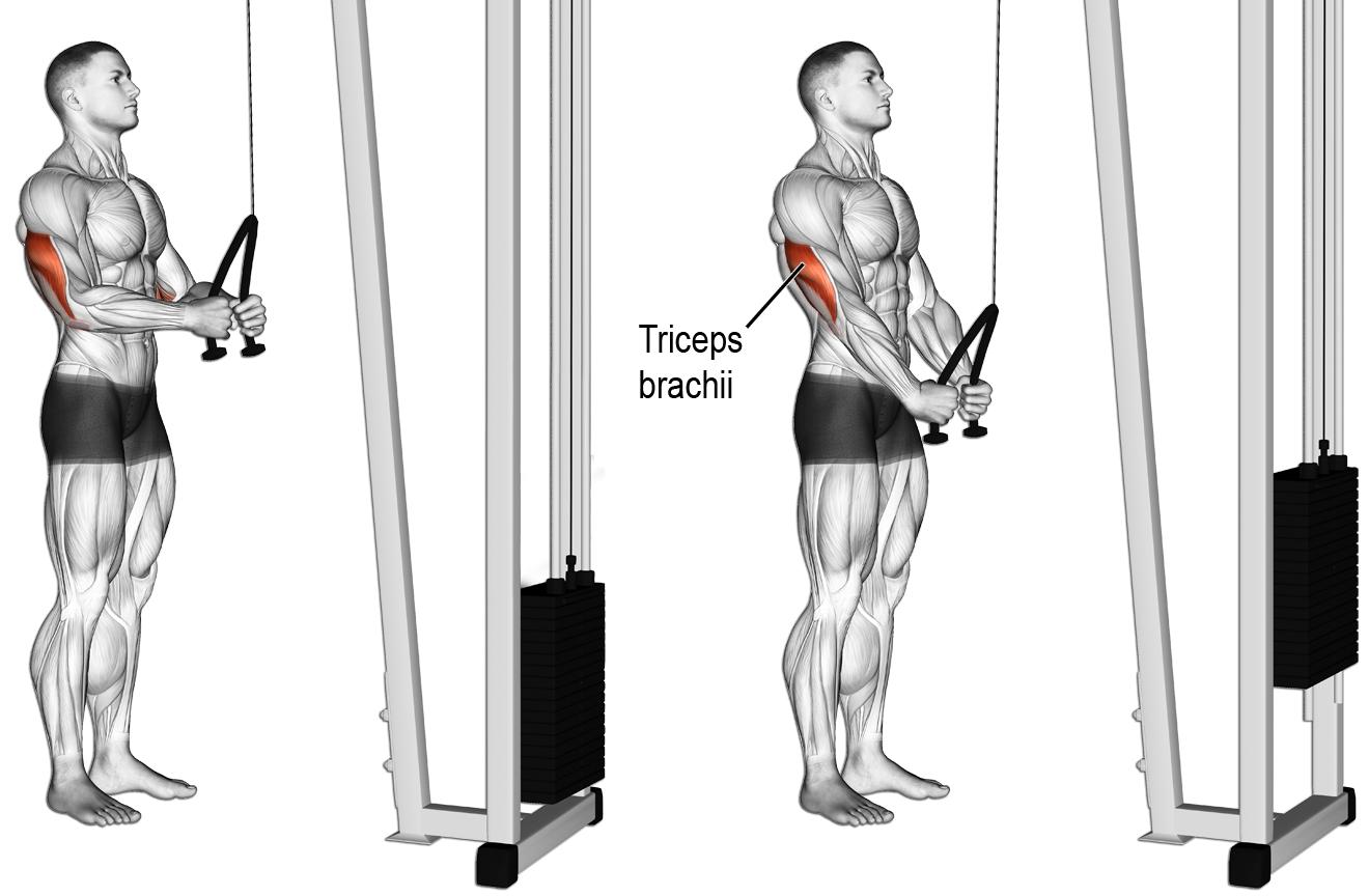 oefeningen triceps tricep push down